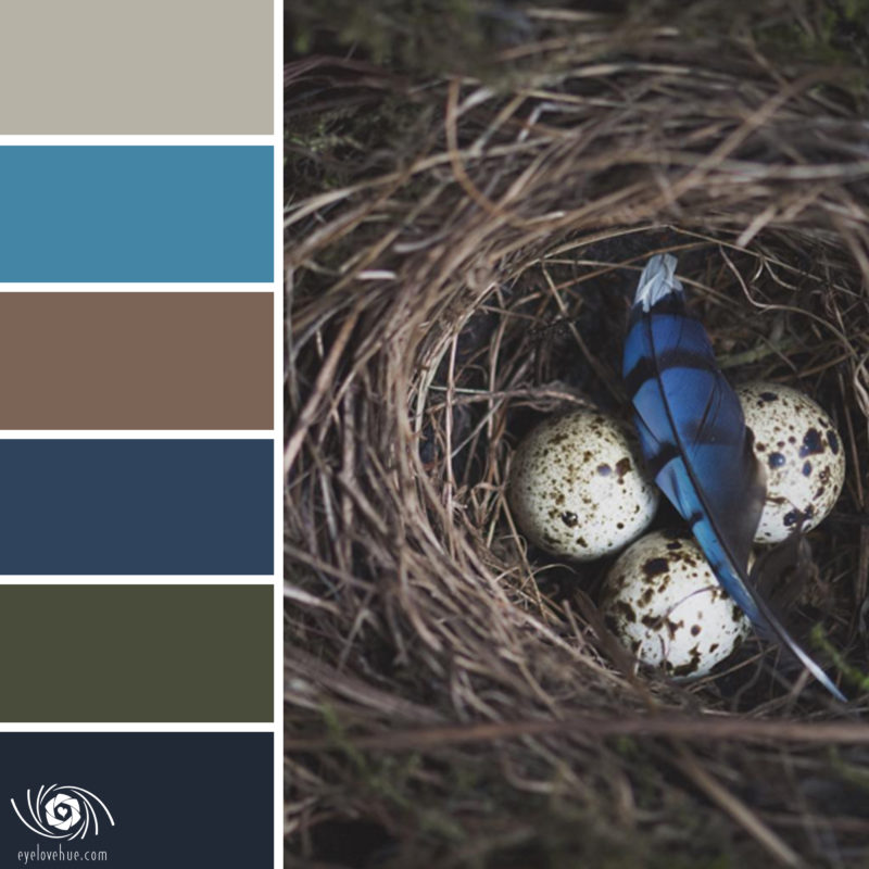BlueJay Feather Nest